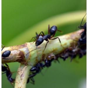 Augalų apsauga nuo kenkėjų
